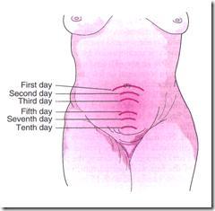 Perubahan Fisiologis Masa Nifas Pada Sistem Reproduksi (Bagian 1)