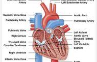 Perubahan Fisiologis Masa Nifas Pada Sistem Kardiovaskuler